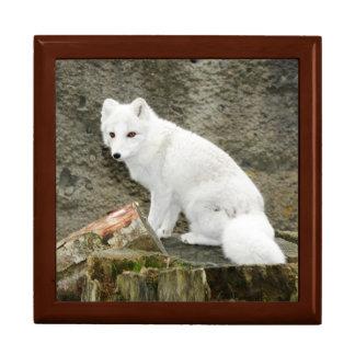 White arctic fox tile gift box
