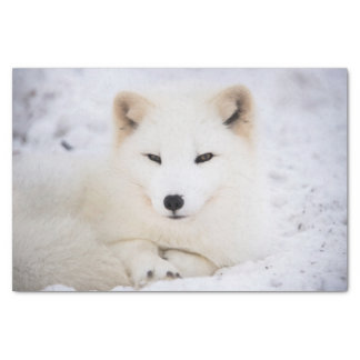 """White arctic fox watching you 10"""" x 15"""" tissue paper"""