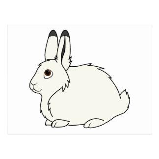 White Arctic Hare Postcard