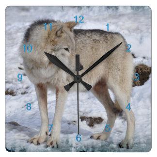 White Arctic Wolf and Snow Wildlife Photo Clock