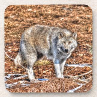 White Arctic Wolf Wildlife Photo Coaster