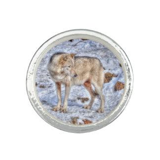 White Arctic Wolf Wildlife & Snow Photo Rings