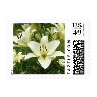White Asiatic Lilies Postage