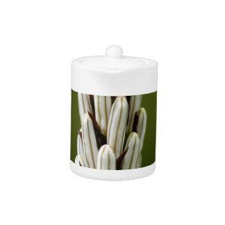 White asphodel (Asphodelus albus) Teapot