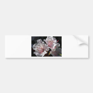White azalea bumper sticker