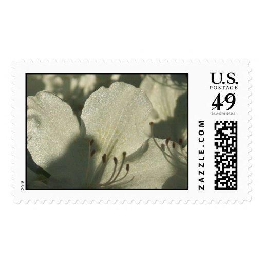 White Azalea Stamp