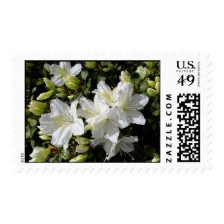 'White Azalea' Stamps