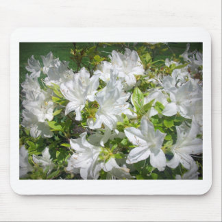 White Azaleas are blooming Mousepads