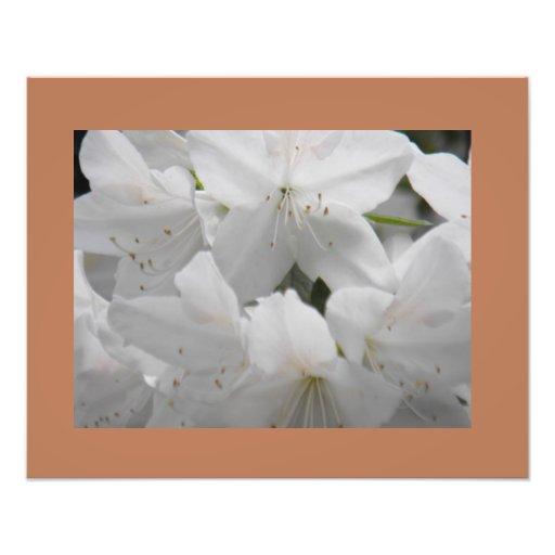 White Azaleas Fine Art Print Photographic Print