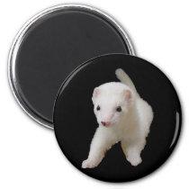 White Baby Ferret Magnet