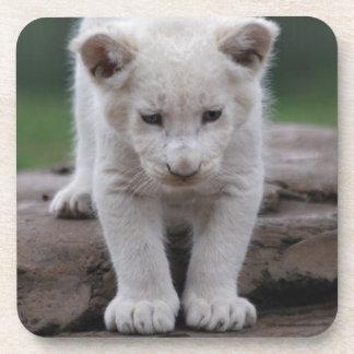 White baby lion cub beverage coaster