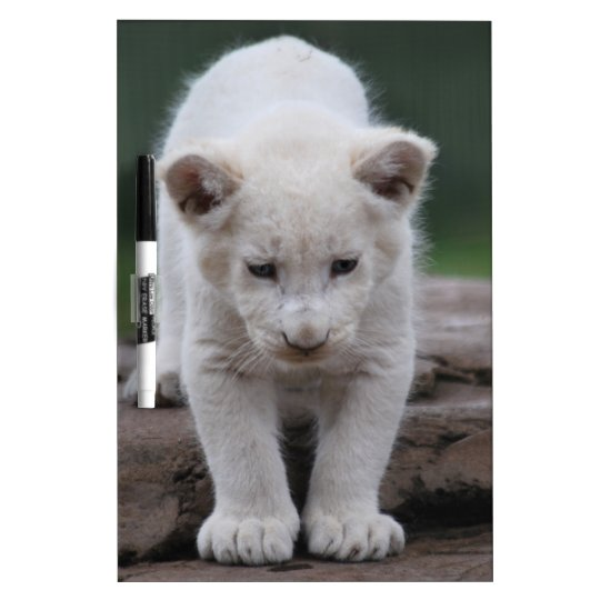 White baby lion cub Dry-Erase board