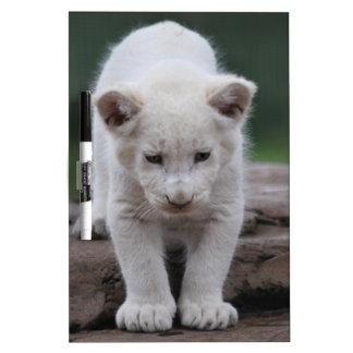 White baby lion cub Dry-Erase whiteboard