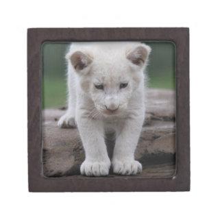 White baby lion cub premium trinket box