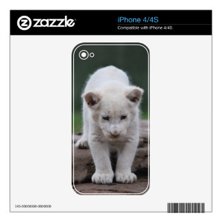 White baby lion cub series decal for the iPhone 4
