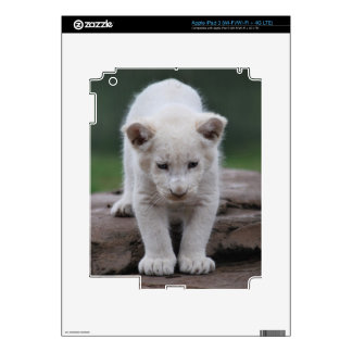 White baby lion cub series skins for iPad 3