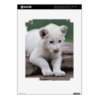 White baby lion cub series iPad 3 decal
