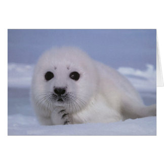 white baby seal card