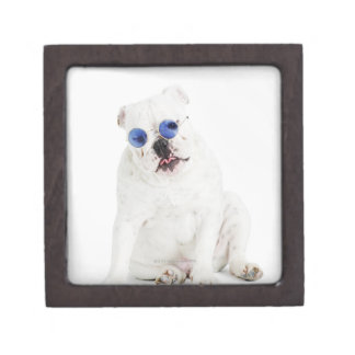 white background, white bulldog, blue tinted keepsake box