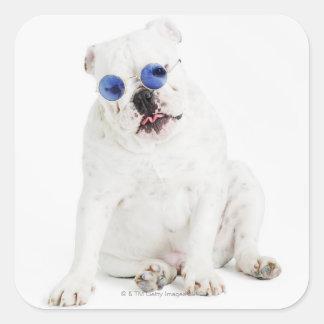 white background, white bulldog, blue tinted square sticker