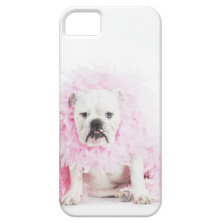white background, white bulldog, pink feather iPhone 5 covers