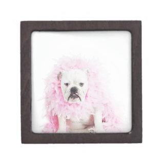 white background, white bulldog, pink feather jewelry box
