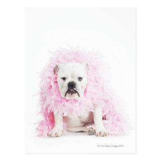 white background, white bulldog, pink feather postcard