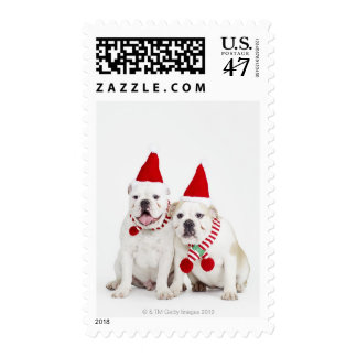 white background, white bulldogs, male dog, postage