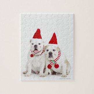white background, white bulldogs, male dog, puzzle