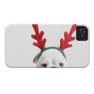 white background, white male bulldog, red Case-Mate iPhone 4 case