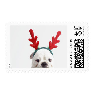 white background, white male bulldog, red postage