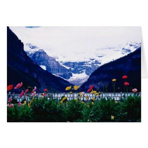 White Banff National Park, Lake Louise flowers Greeting Cards