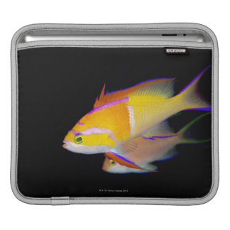 White Bar Anthias iPad Sleeve