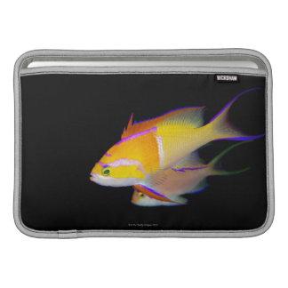White Bar Anthias MacBook Sleeve