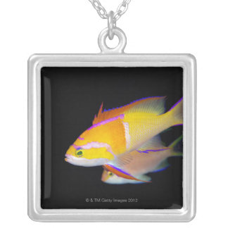 White Bar Anthias Silver Plated Necklace