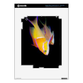 White Bar Anthias iPad 3 Skins