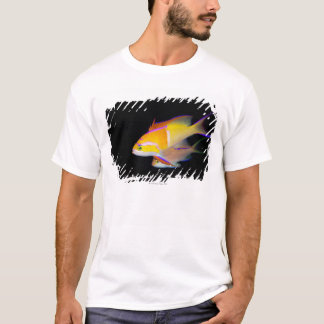 White Bar Anthias T-Shirt