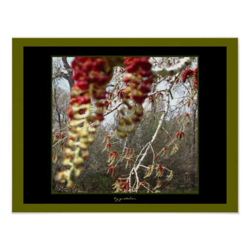 White Bark Tree Pimento Olive Flowers Two Poster