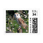 White Barn Owl Bird Floral Nature Stamp