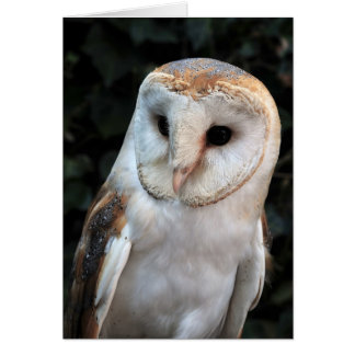 White Barn Owl Card