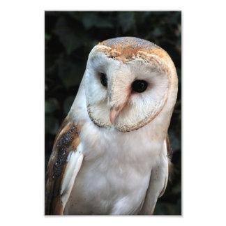 White Barn Owl Photo Art