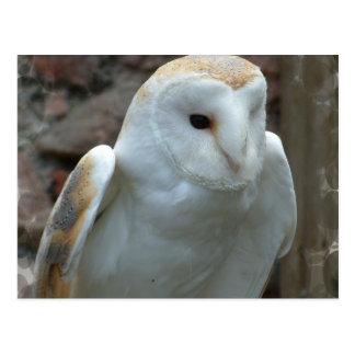 White Barn Owl  Postcard