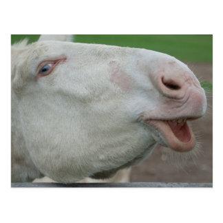 White Baroque Donkey Postcard