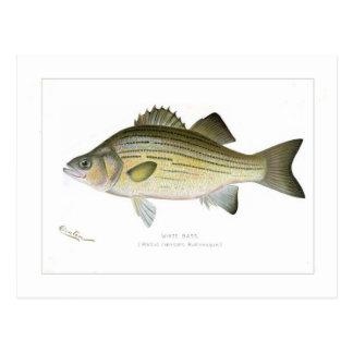 White Bass Postcard