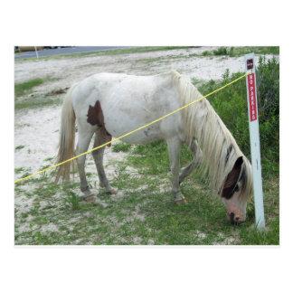 White Beach Pony Postcard