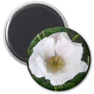 White Beach Rose Magnet