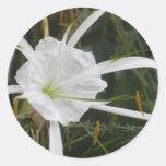White Beach Spider Lily Lilies Flower Photo Classic Round Sticker