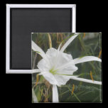 White Beach Spider Lily Lilies Flower Photo Magnet