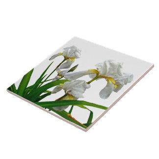 White Bearded Iris Blossoms Ceramic Tile