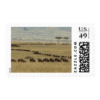 White-bearded Wildebeest or Gnu Connochaetes 2 Postage Stamps